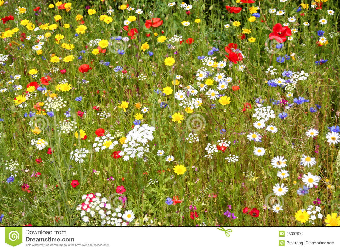Wild Flowers Stock Images Image 35307974