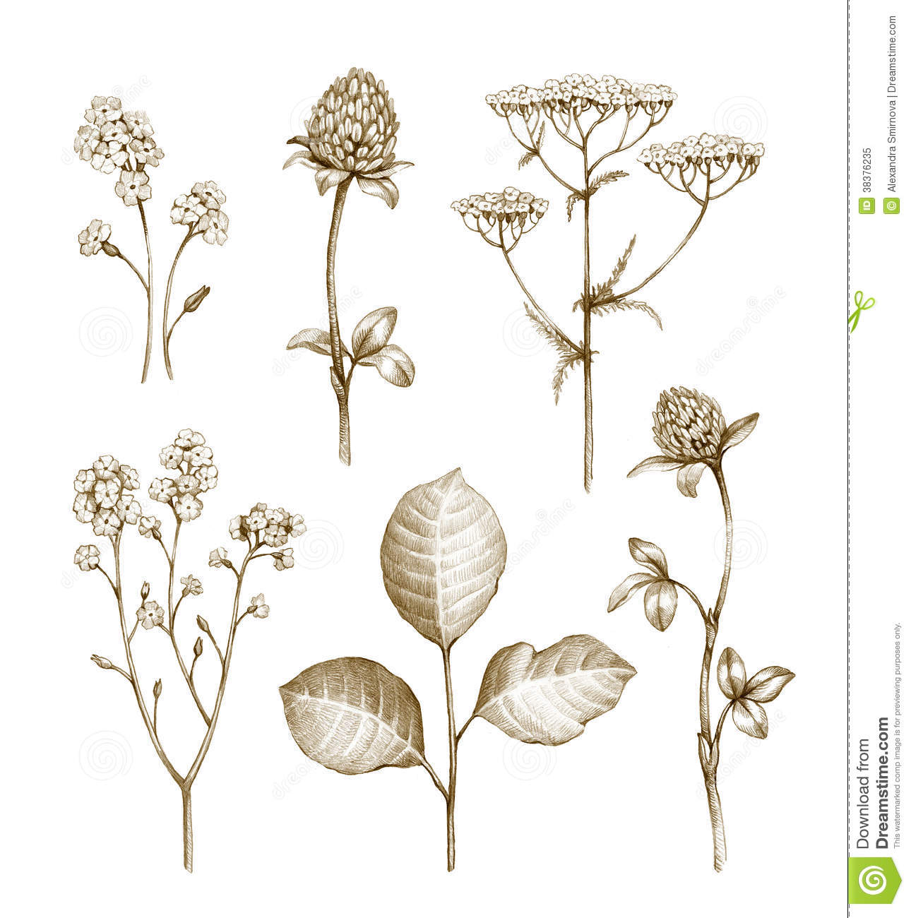 wild plants essay Published: mon, 24 apr 2017 the main objective for this experiment was to examine the effects of gibberellic acid which is a plant hormone on different genotypes of a plant called brasscia rapa, which included wild type, petite, elongate, and rosette.