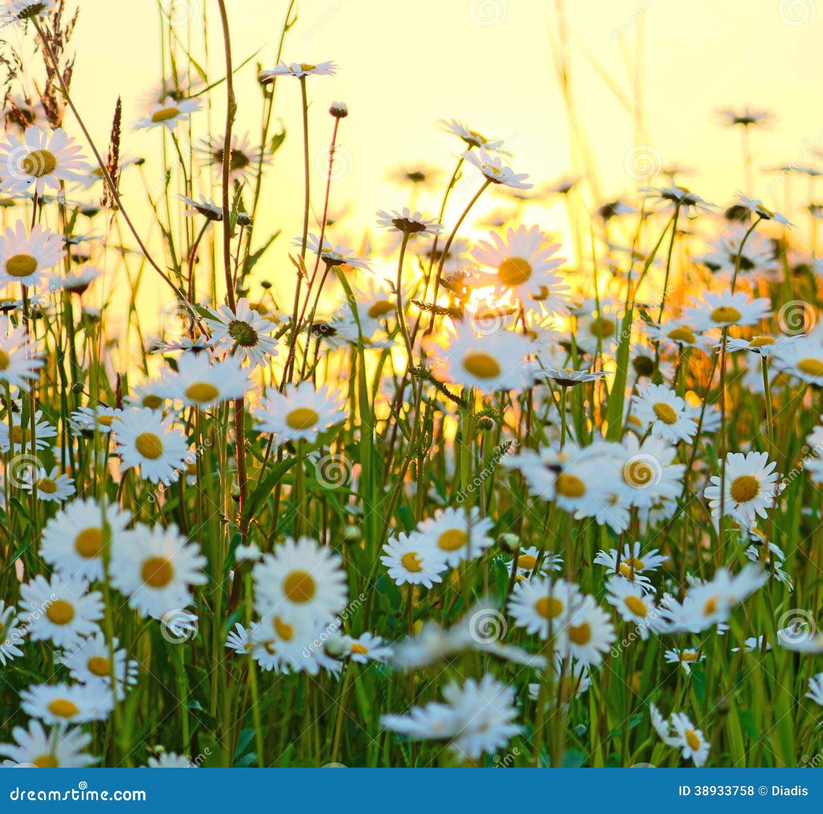Wild Flowers Field Stock Photo Image Of Field Blumenfeld 38933758