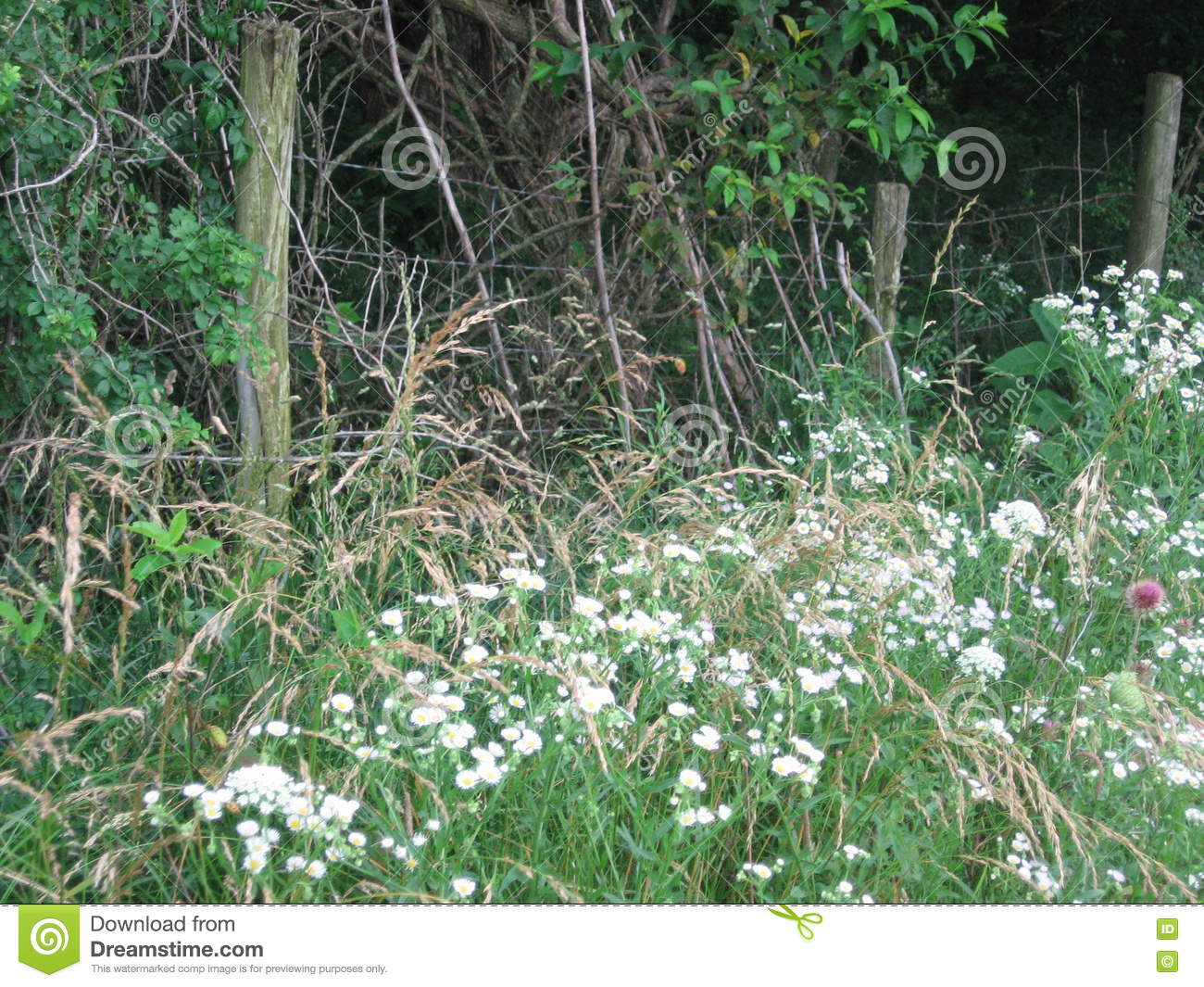 Wild Flowers In Front Of A Woodland Fence Stock Image Image Of
