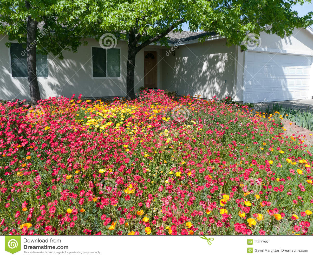 Wild flowers in the front yard stock image image 32077951 - Flowers in the front yard ...