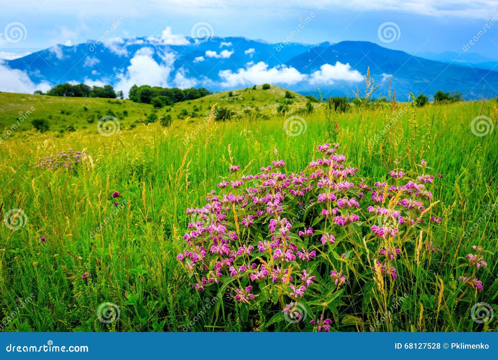 wild flowers on mountain meadow stock photo
