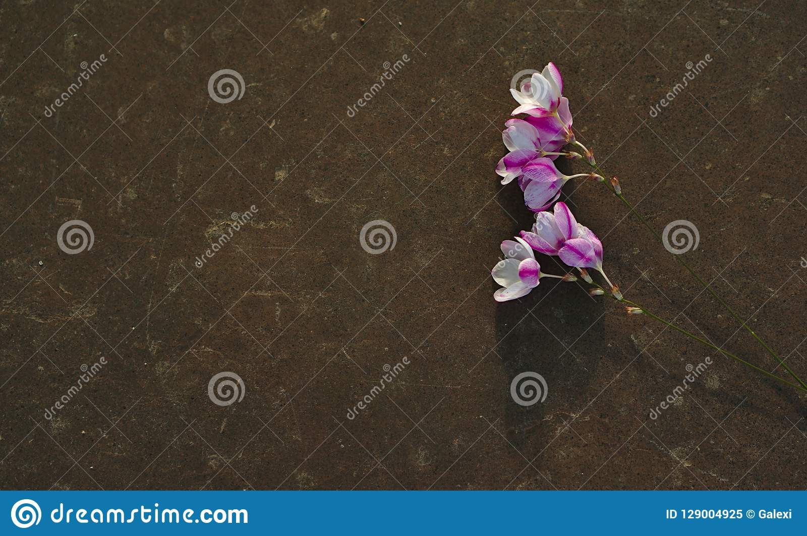Wild flowers on plain tombstone