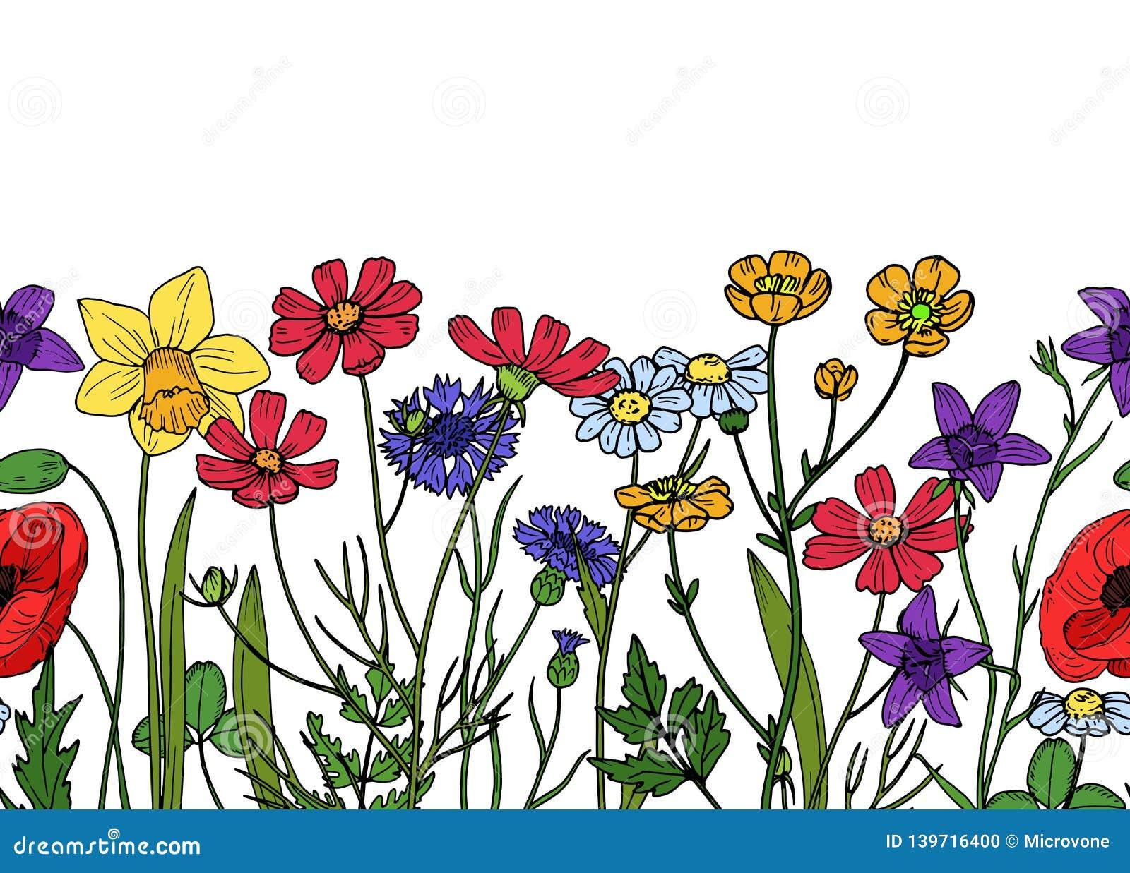 Wild Flowers Seamless Border Field Of Meadow Herb Floral Vintage
