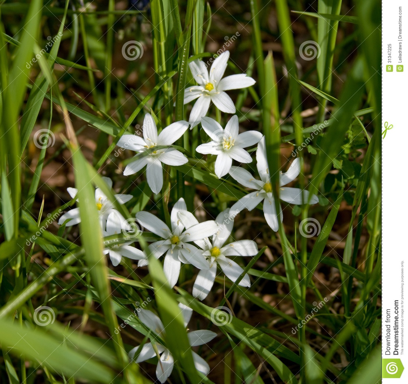 Wild Flowers Stock Image Image Of Spring Summer Lily 31347225