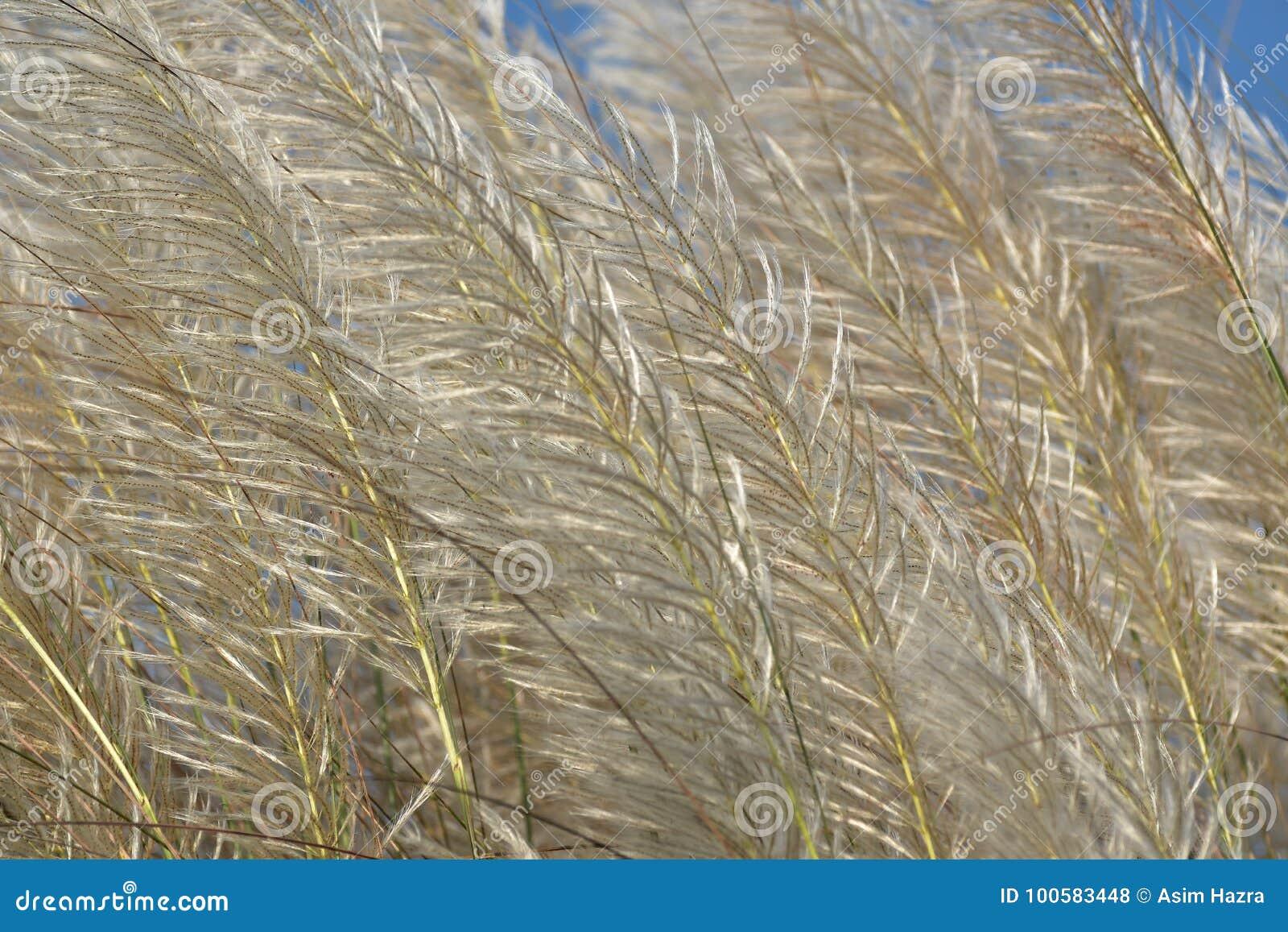 wild grass texture. Download Wild Grass Flower Texture Stock Photo. Image Of - 100583448 Wild E
