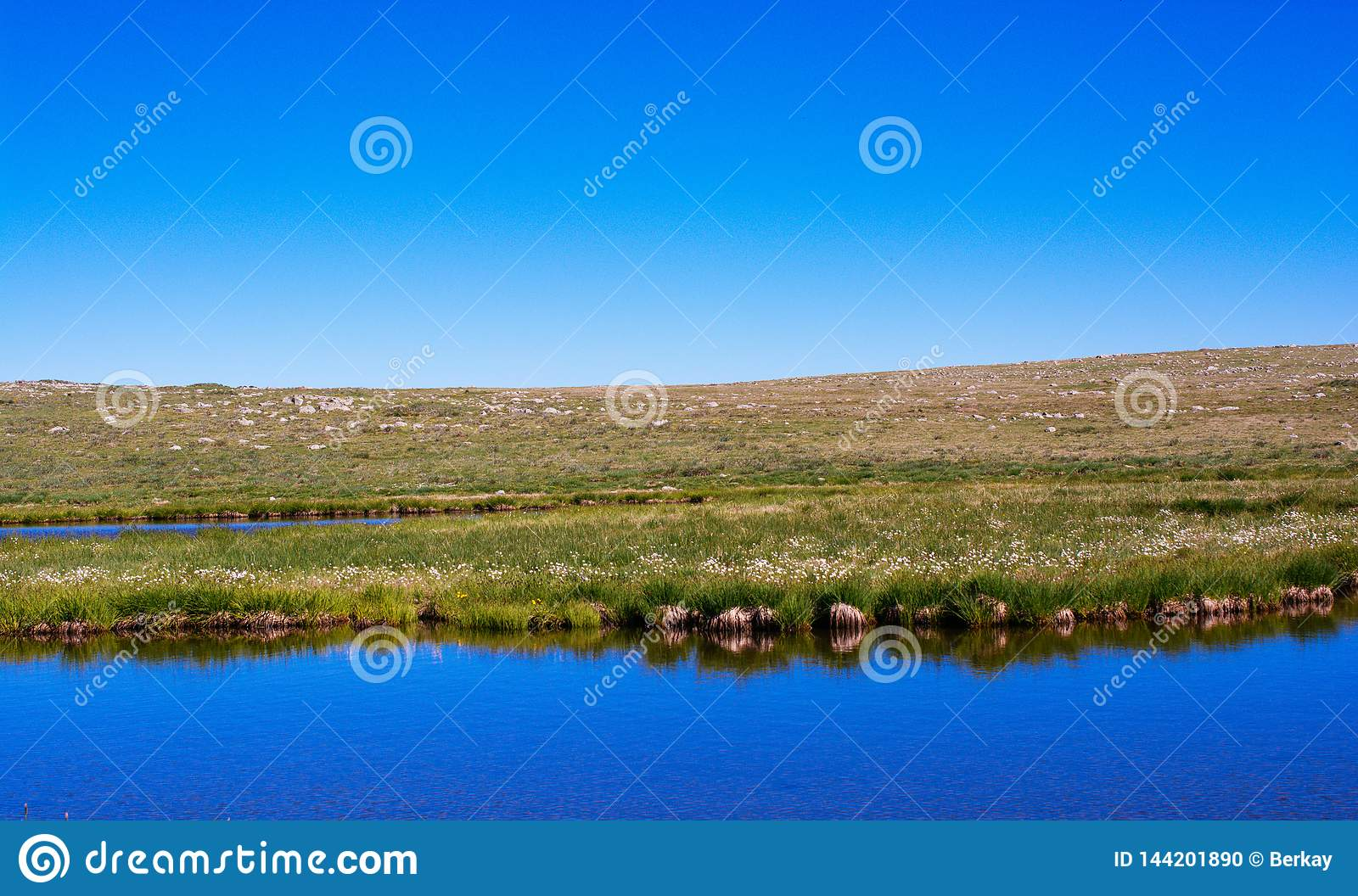 Wild Grass By The Pond On Highland In Artvin Stock Photo ...