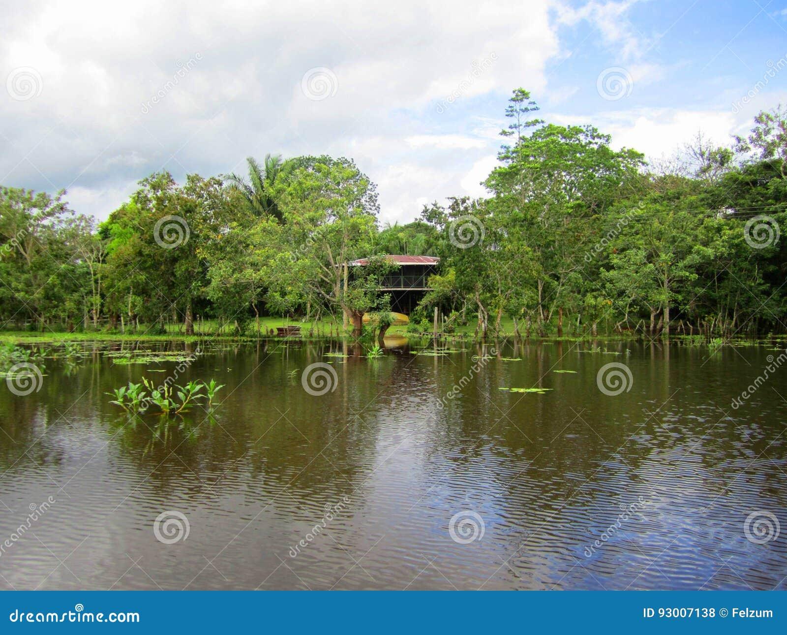 Wild het Levenstoevluchtsoord Costa Rica van de Cañozwarte
