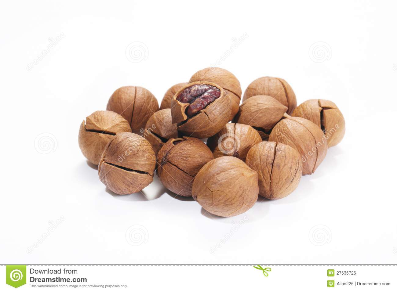 Shagbark hickory nuts — Stock Photo © jianghongyan #53137065