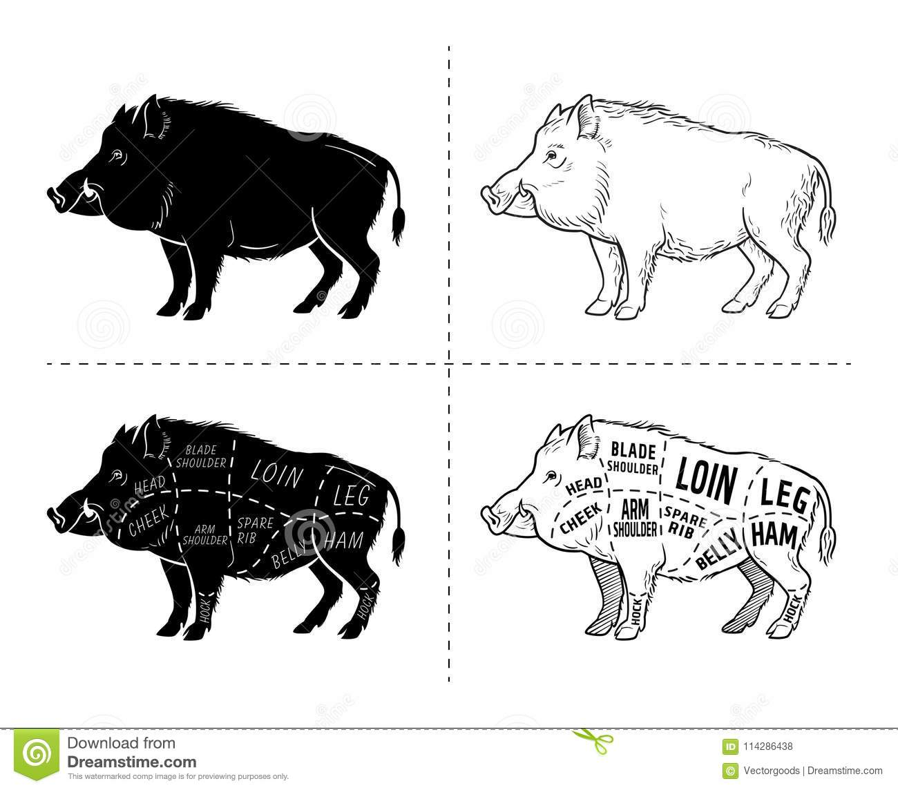 Diagram Of Wild Pig - Residential Electrical Symbols •