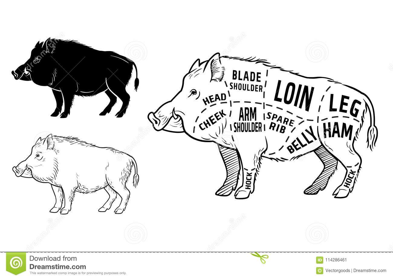 pig diagram game
