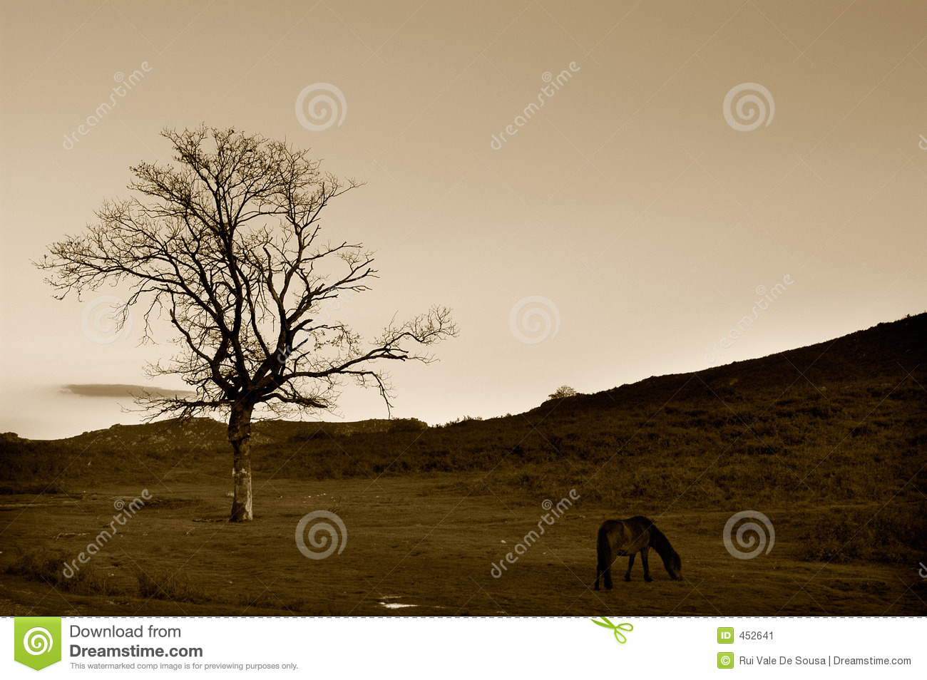 Download Wild horse stock image. Image of vegetation, animal, branches - 452641