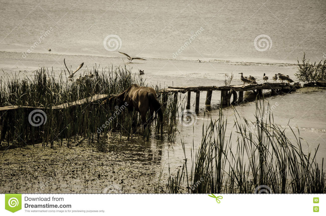 Wild horse and birds sitting in a pond with an old bridge sinking