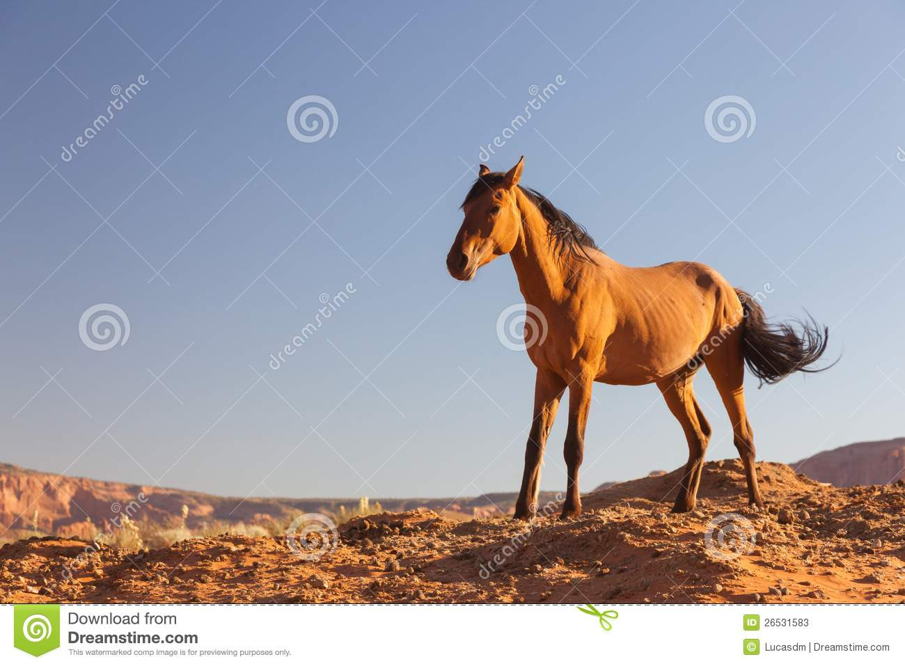 Wild horse bronco stock photos royalty free stock images