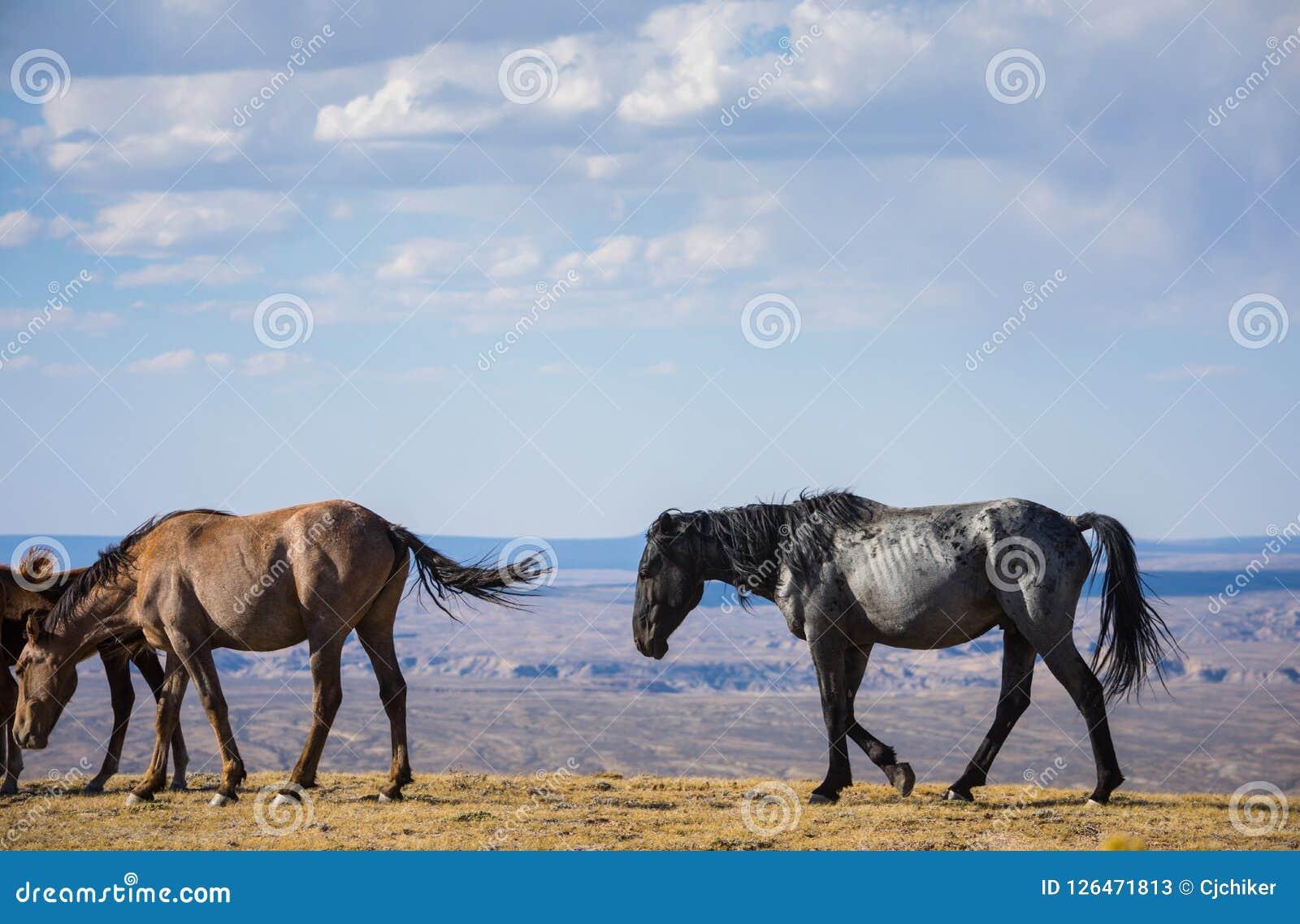 Wild Horses Brown And Black Stock Image Image Of Black Desert 126471813