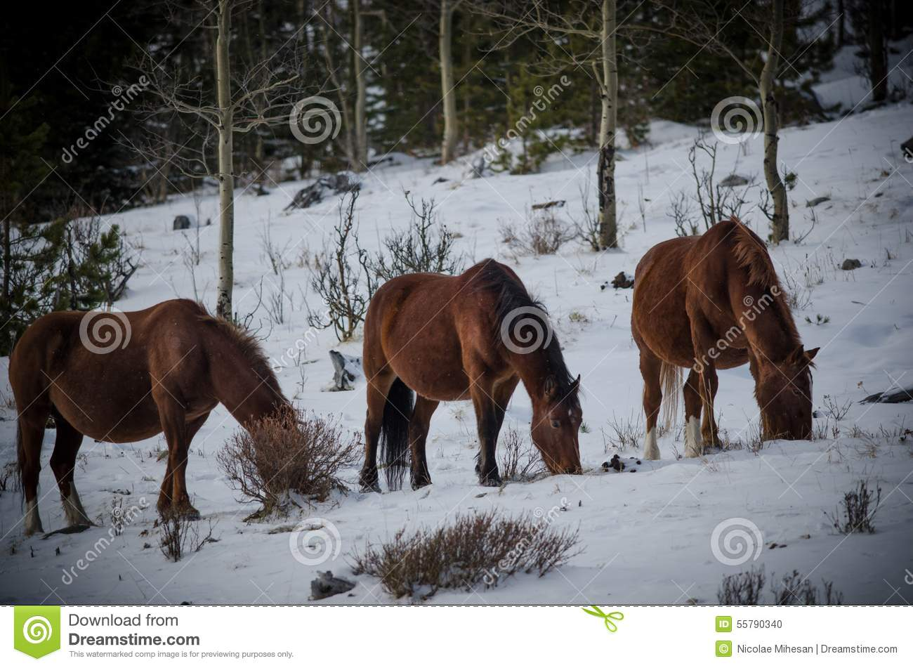canadian rockies map with Stock Photo Wild Horses Kananaskis Winter Scenery Canadian Rockies Image55790340 on 18822514516 in addition Canada as well Stock Photo Wild Horses Kananaskis Winter Scenery Canadian Rockies Image55790340 further National Parks Tour further banffparklodge.