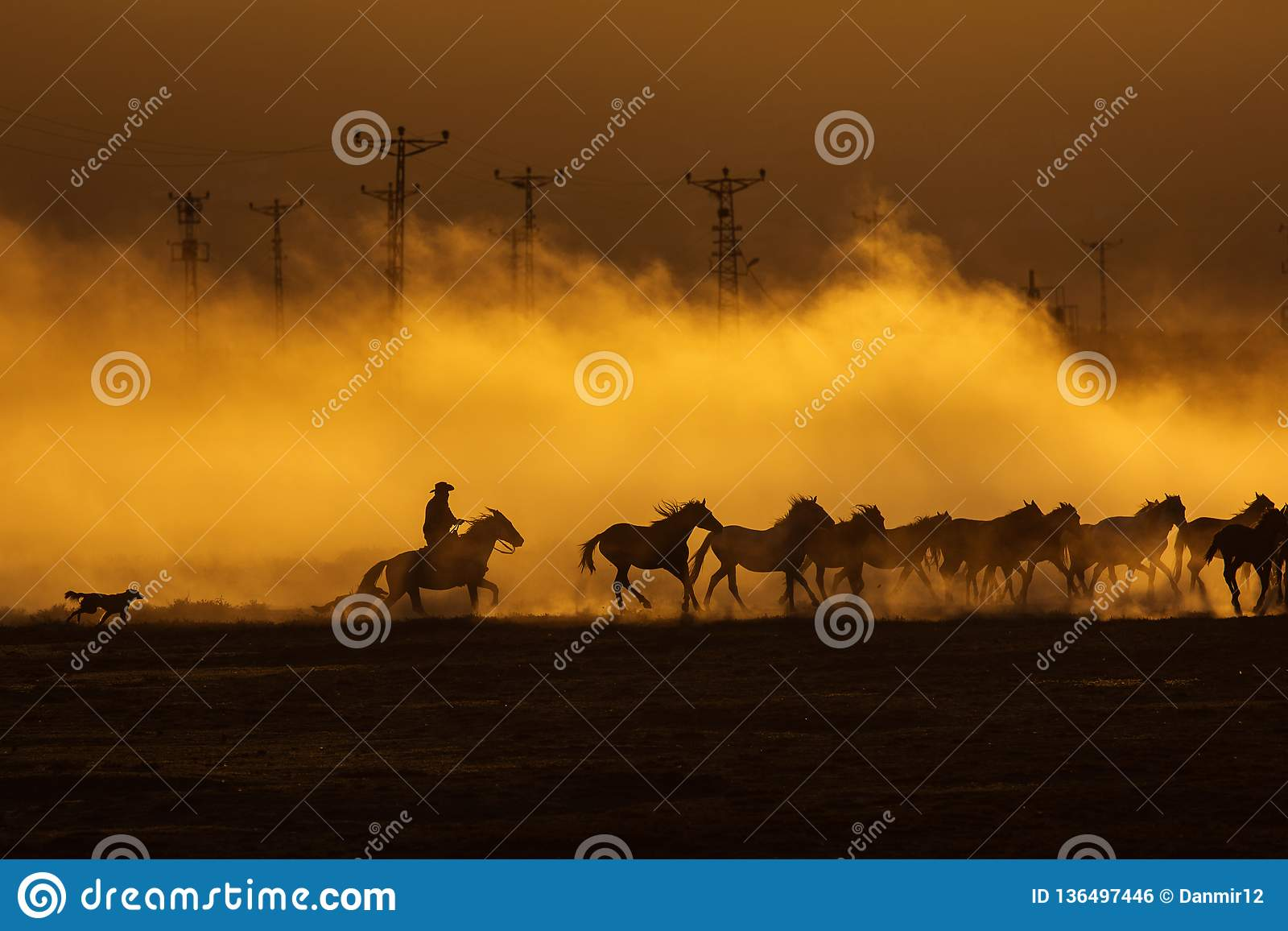Wild horses leads by a cowboy at sunset with dust in background