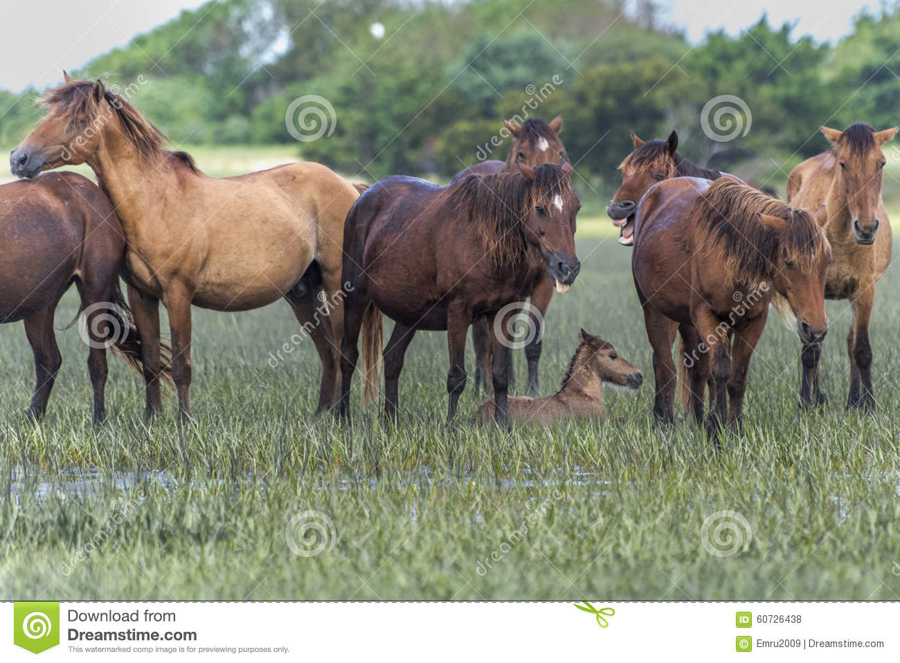 Wild horses in outerbanks of North Carolina