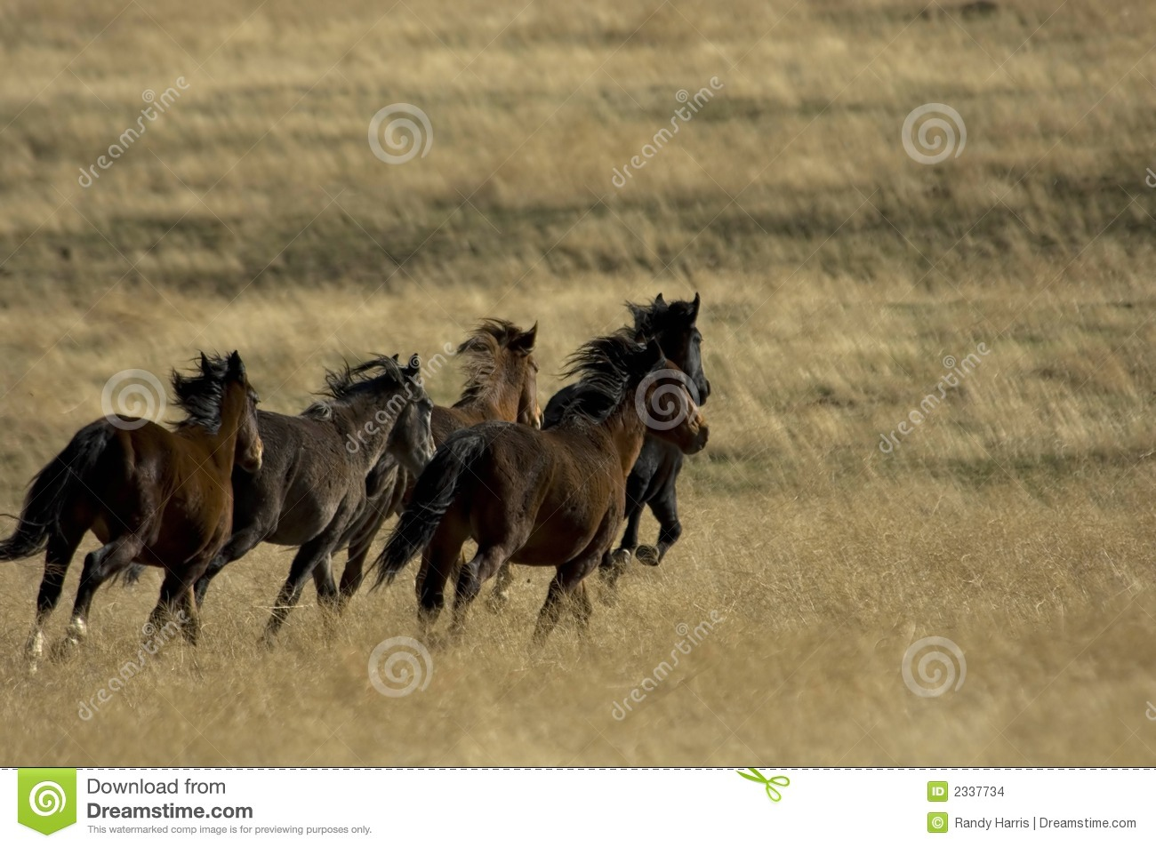 wild horse hispanic single women See a rich collection of stock images, vectors, or photos for horse sketch you can buy on shutterstock explore quality images, photos, art & more.