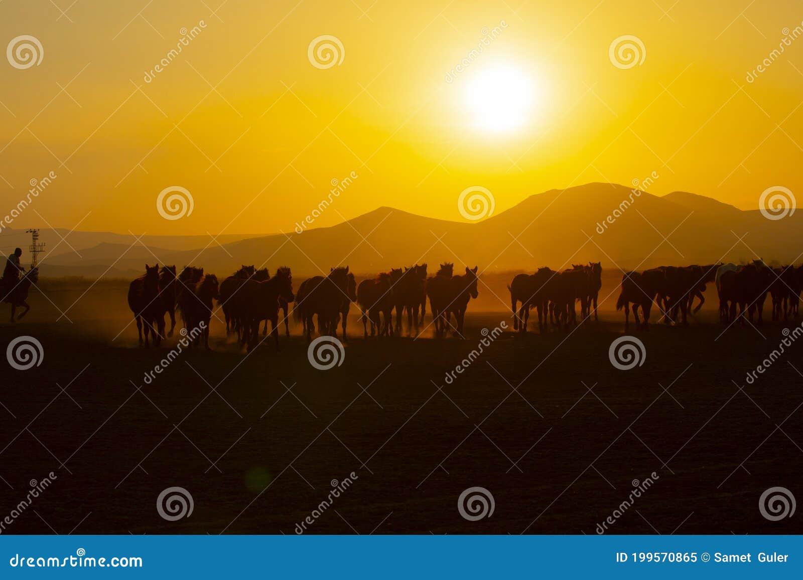 Wild Horses Running At Sunset Kayseri Turkey Stock Image Image Of Christmas Cowboy 199570865