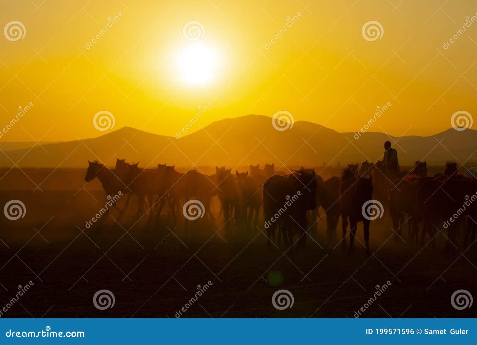 Wild Horses Running At Sunset Kayseri Turkey Editorial Photo Image Of Forward Galloping 199571596