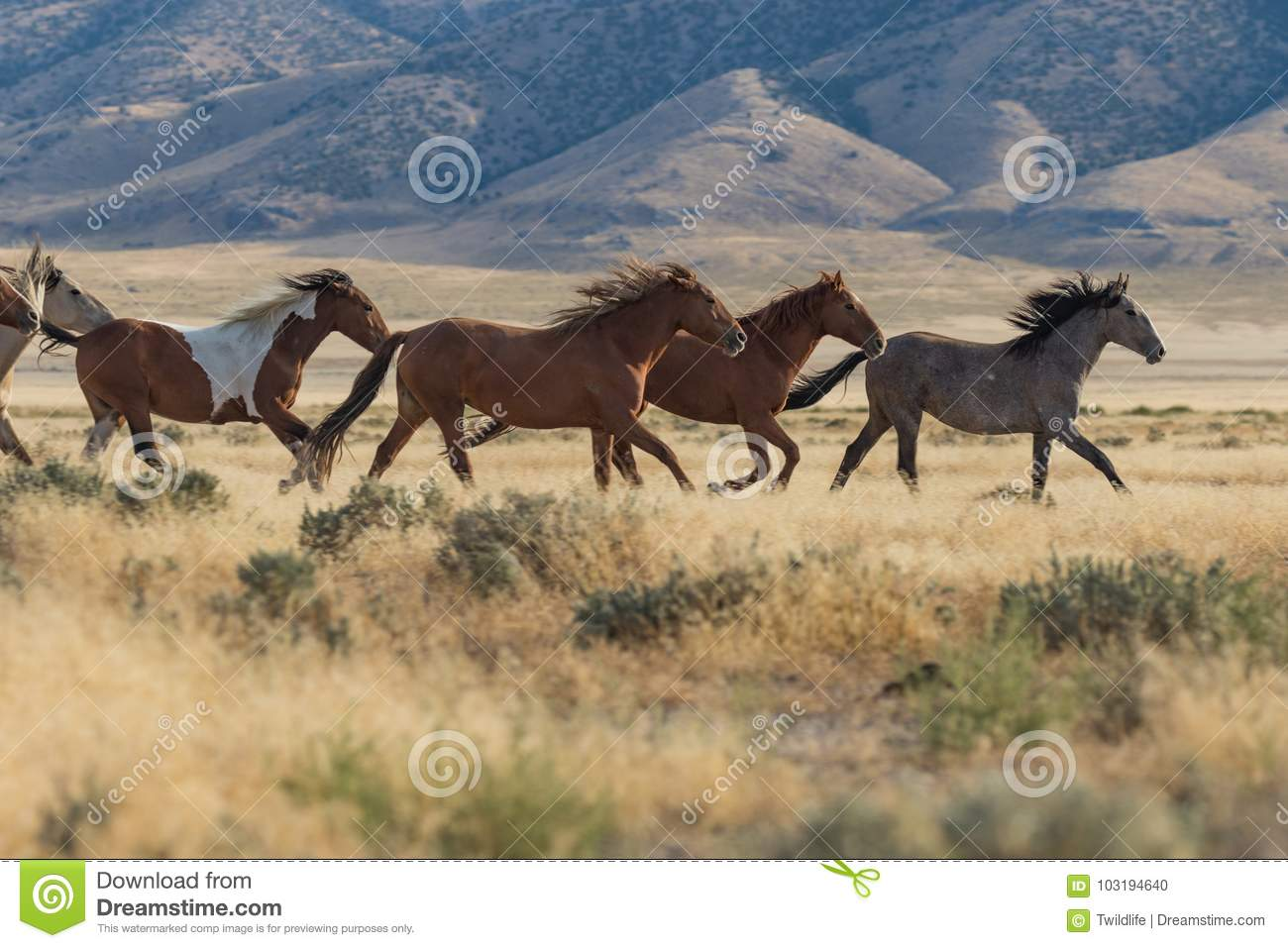 6 799 Wild Horses Running Photos Free Royalty Free Stock Photos From Dreamstime