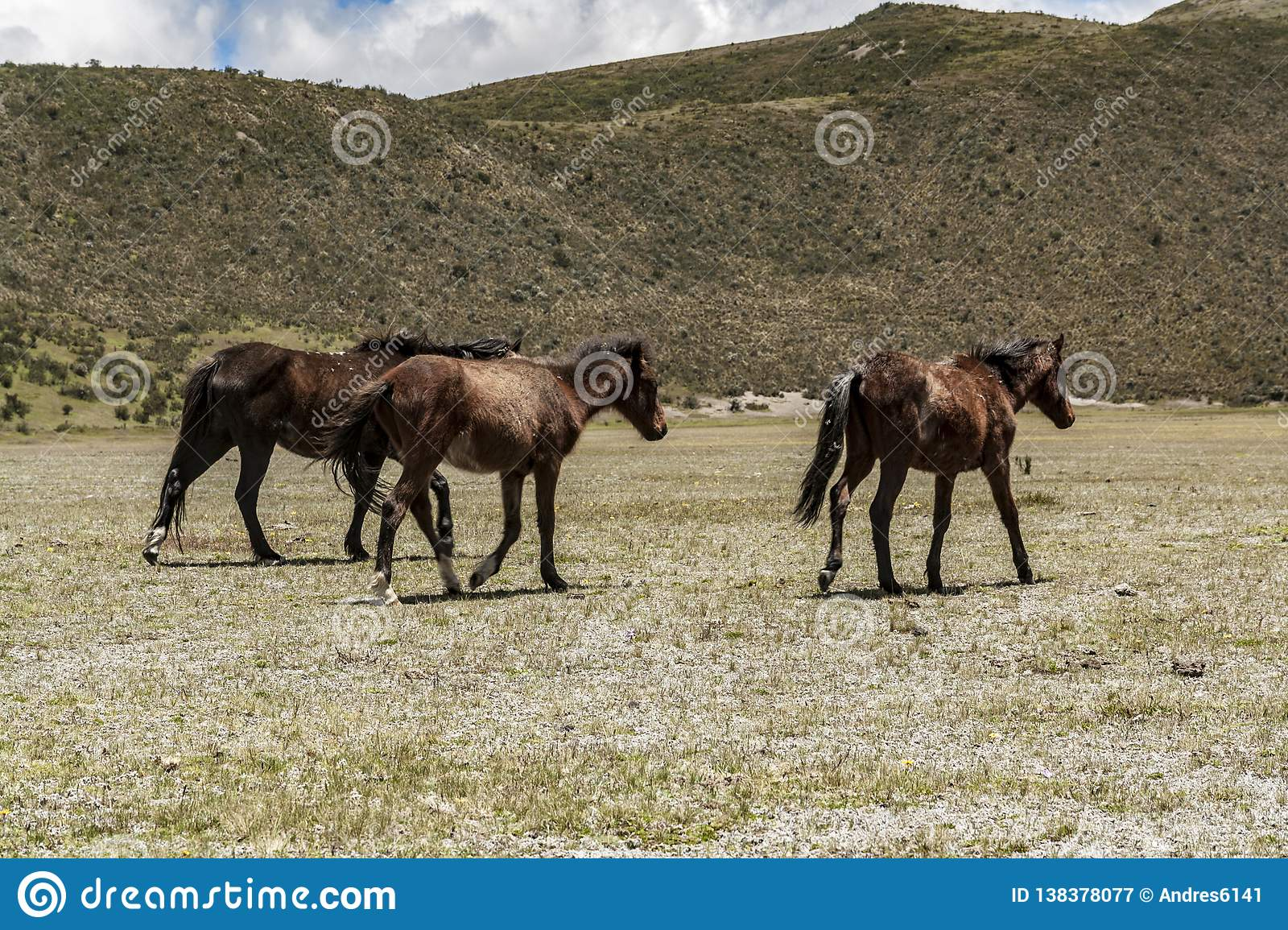 Wild horses walking in a national park