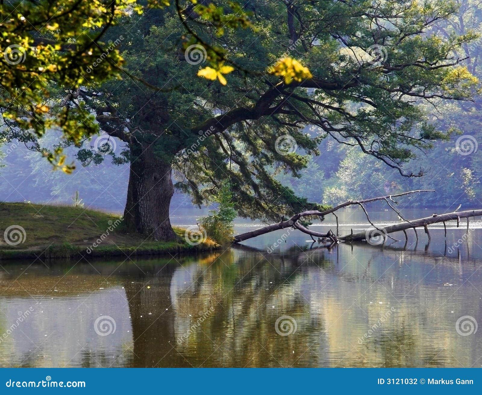 Wild laketree