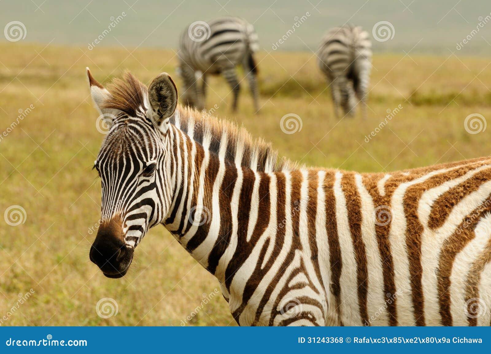 wild lebende tiere in afrika stockfoto bild 31243368. Black Bedroom Furniture Sets. Home Design Ideas