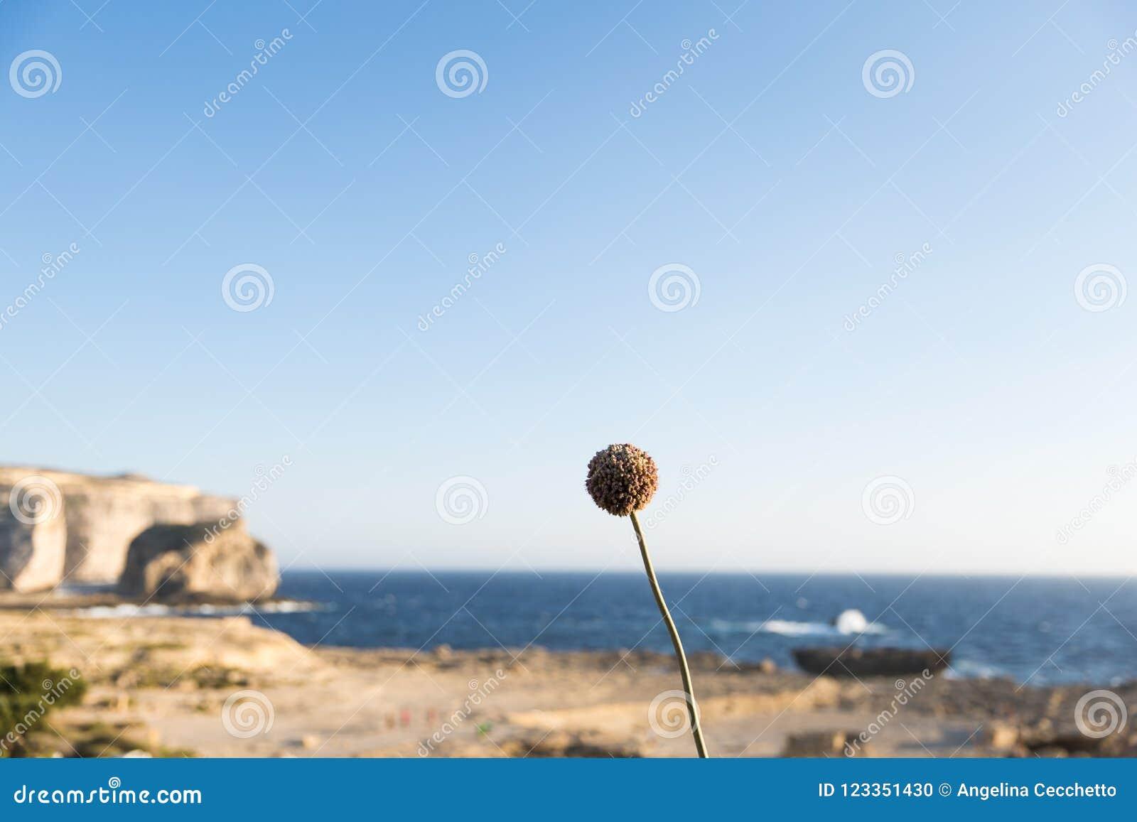 Limestone quarry on the island of Gozo - a photo on Flickriver   Gozo Limestone