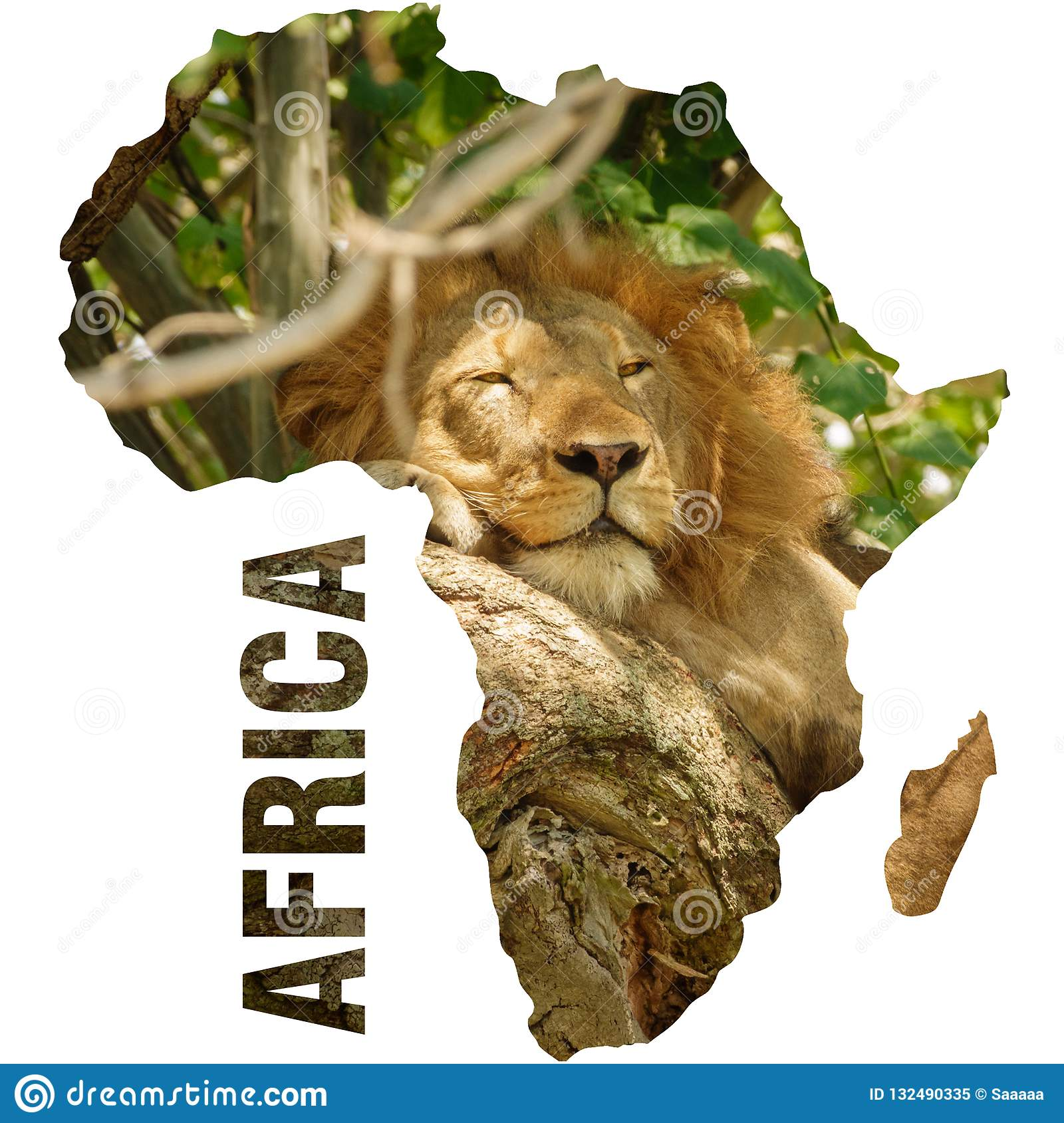Lion Outline Photos Free Royalty Free Stock Photos From Dreamstime Choose from 5,332 printable design templates, like roaring lion outline posters, flyers, mockups, invitation cards, business cards, brochure,etc. https www dreamstime com wild lion sleepoing over tree branch africa continent outline africa continent outline male lion sleeping tree branch image132490335