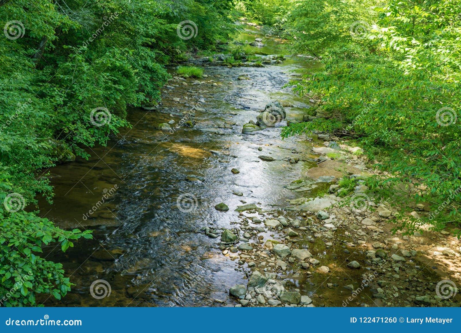Wild Mountain Trout Stream