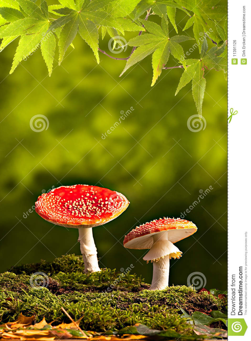 wild mushroom fall autumn background copy space