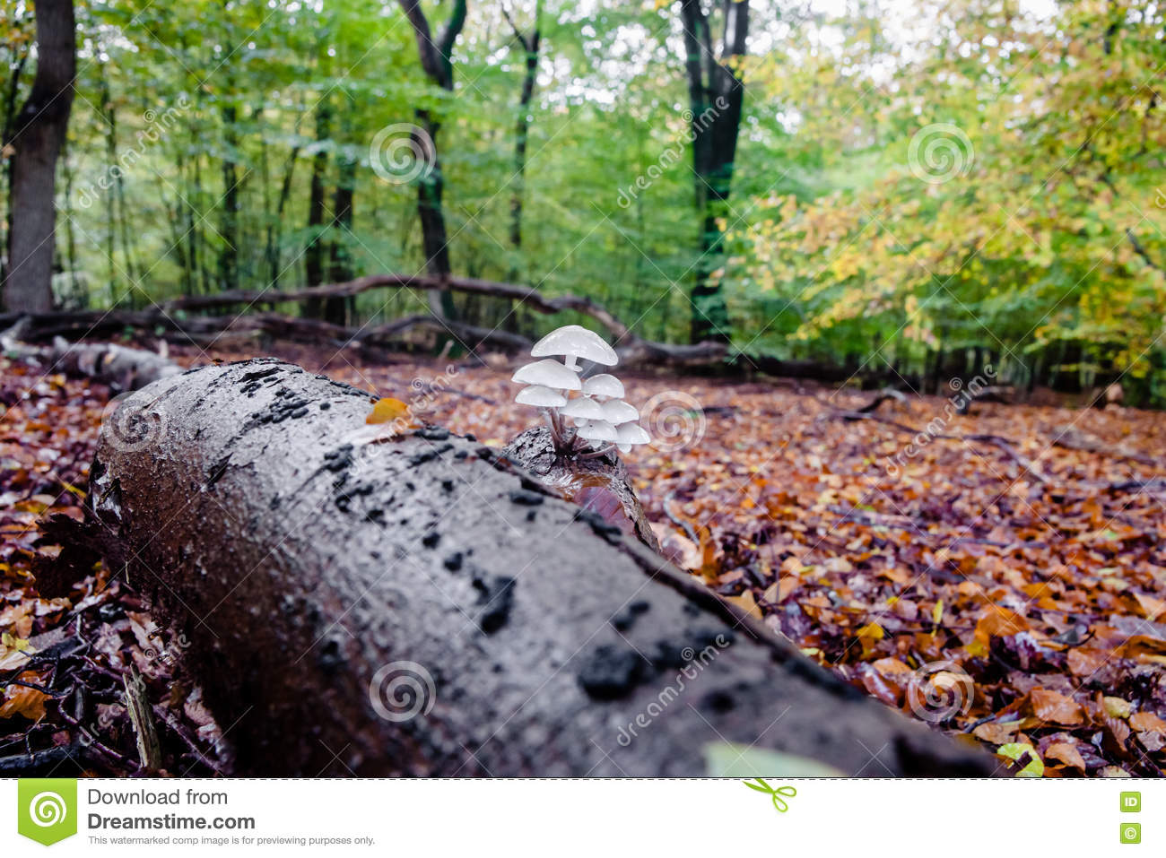Wild Mushrooms At Autumn In Forrest Stock Photo - Image of green ...