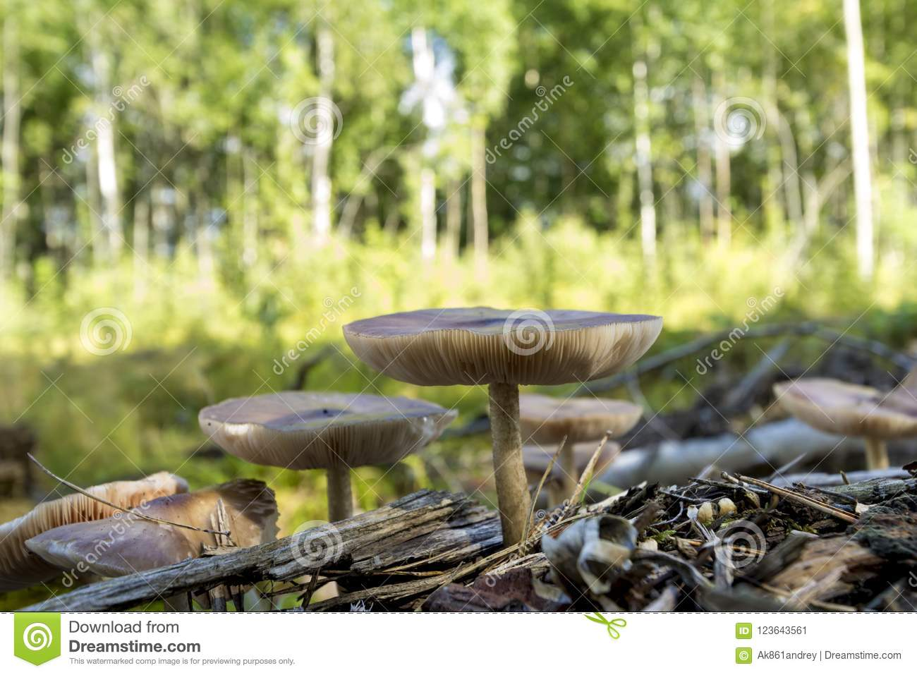 Wild Mushrooms On The Edge Of The Forest Stock Image - Image of ...