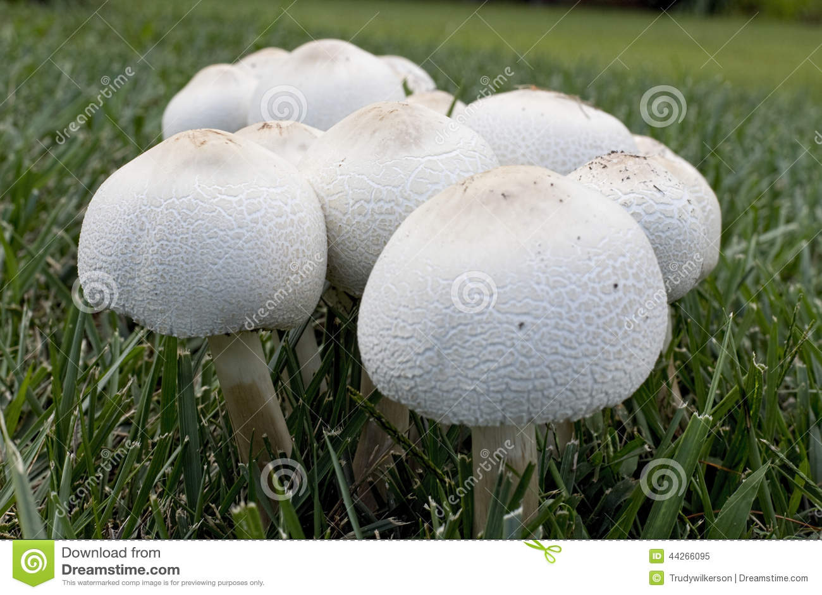 How to Become a Profitable Mushroom Grower