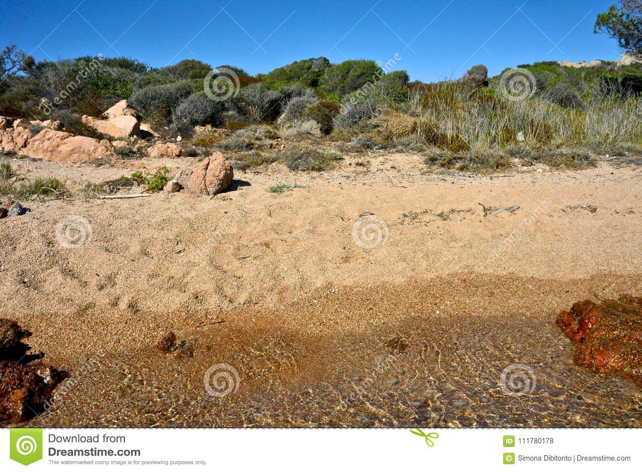 Wild nature on a sandy beach with the sea