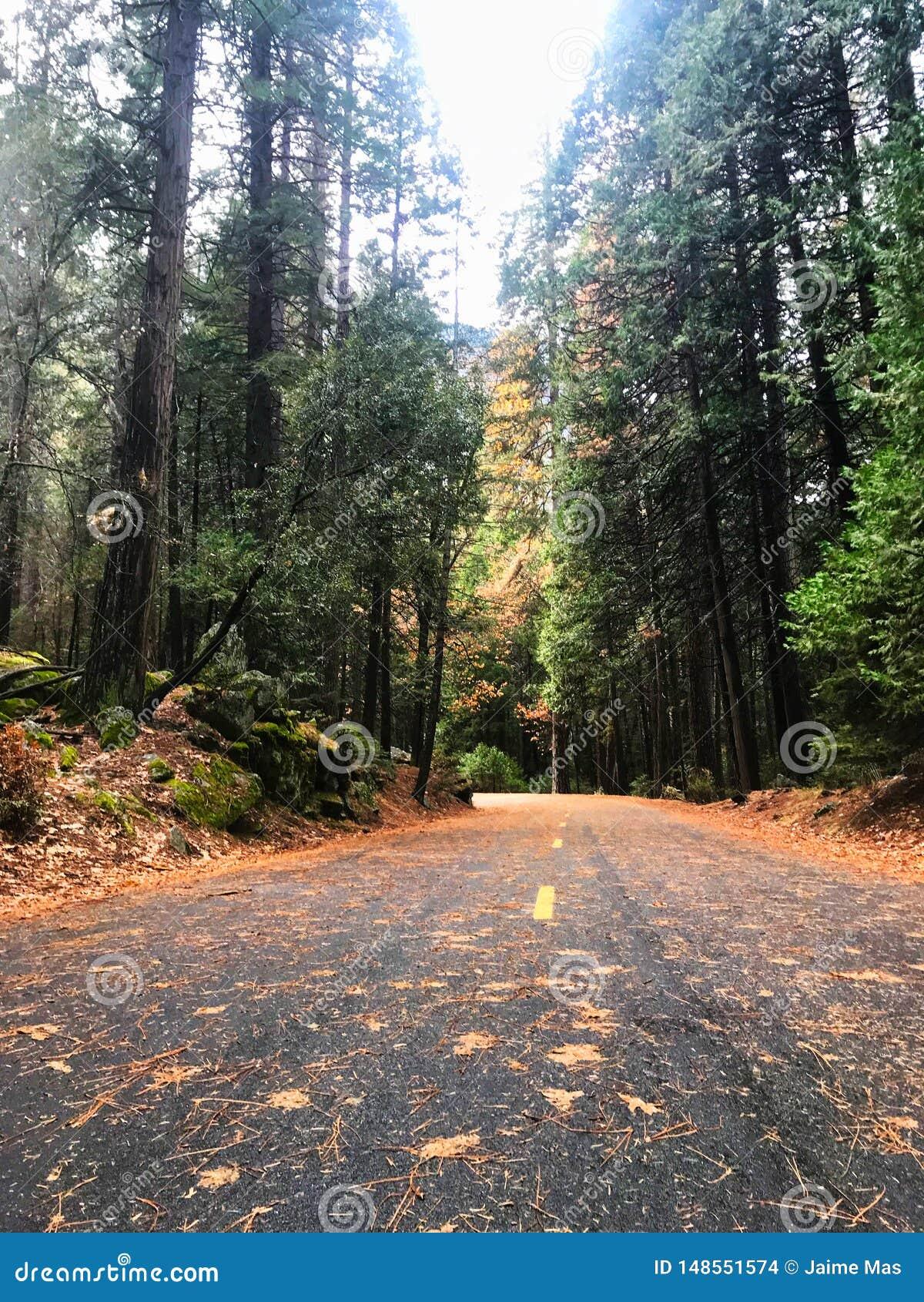 wild road and nature at yosemite natural park