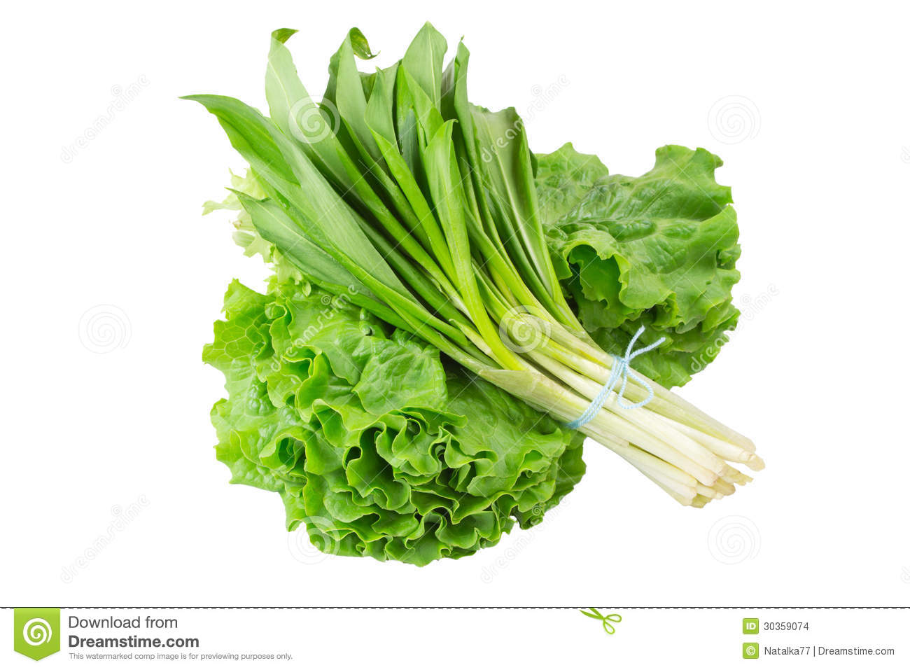 Wild onion and lettuce