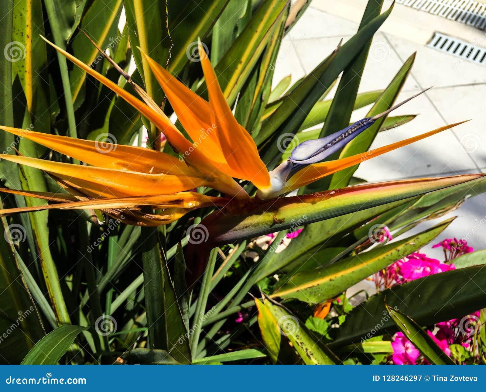 Wild orange flower