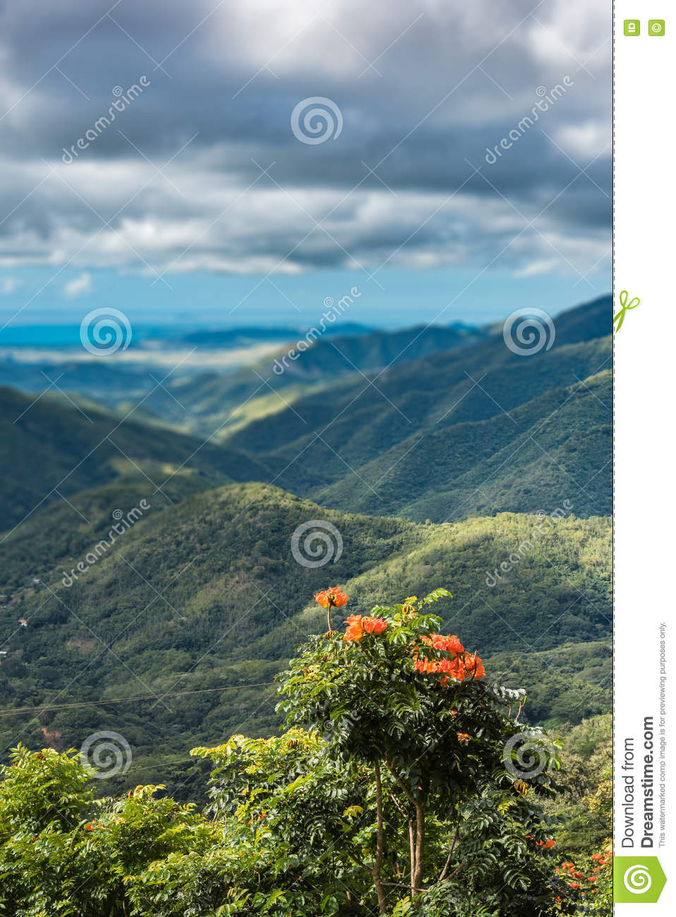 Wild orange flowers with shallow background of rolling hills