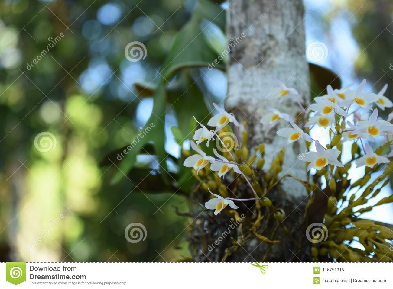 Wild Orchid Rare And Gorgeous Stock Image Image Of Gardening