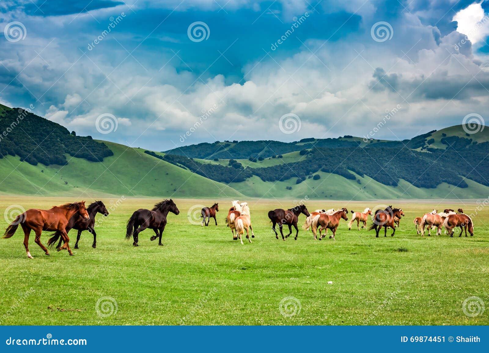 Wild paarden in castelluccio vallei itali stock foto - El valle de los caballos ...