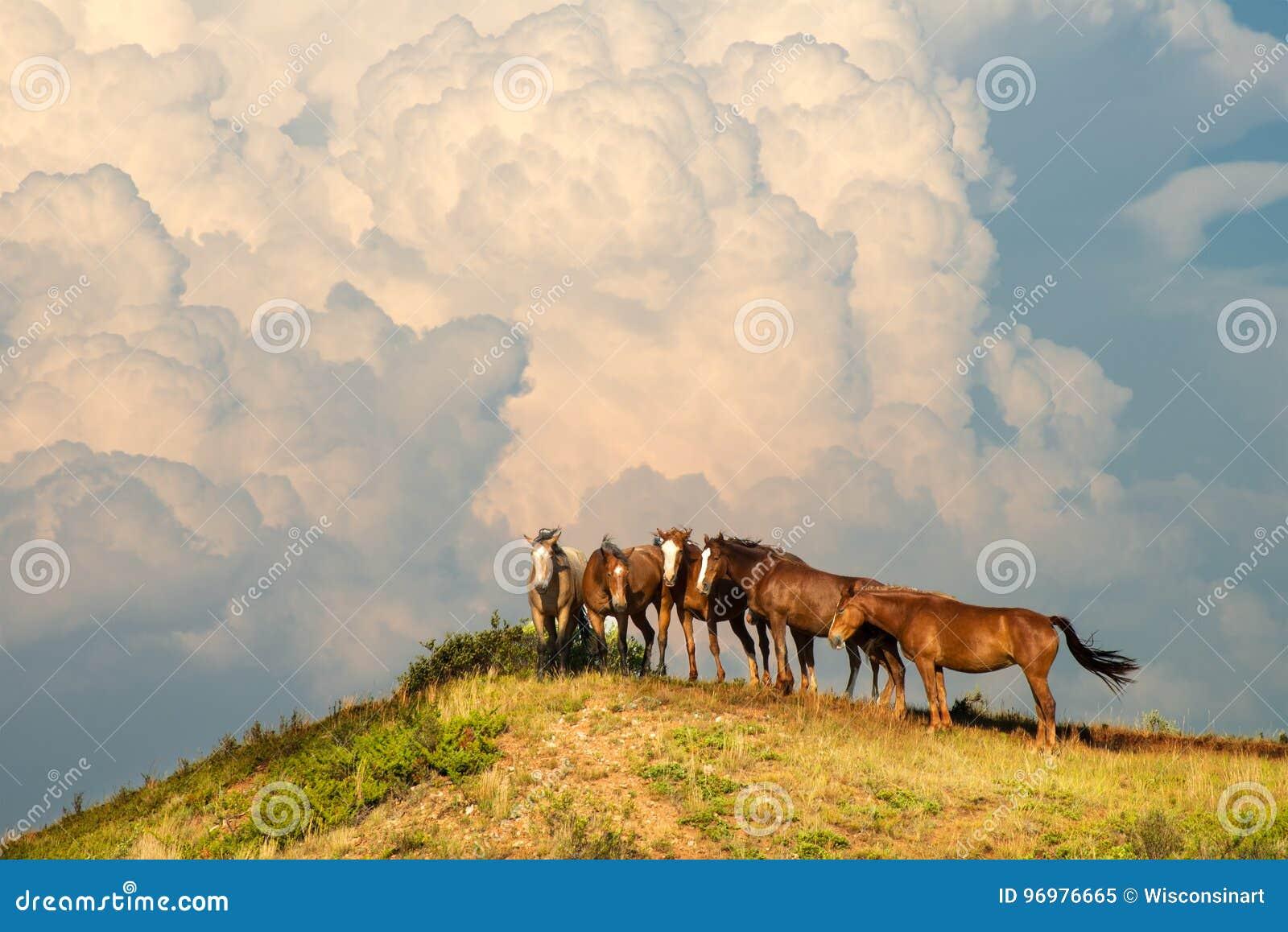 Wild paardkudde, Paarden, Onweerswolk