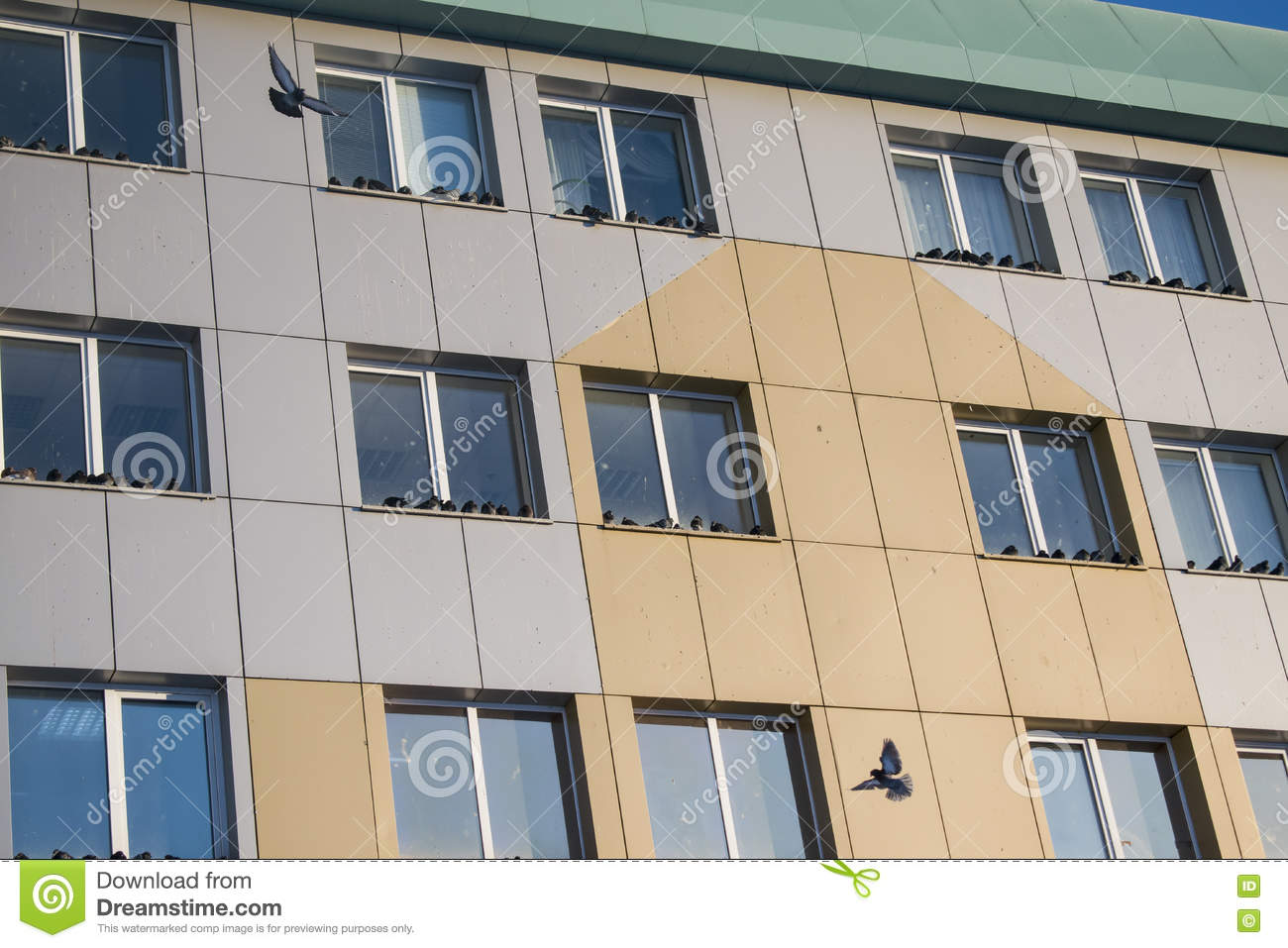 Download The Wild Pigeons Sitting On Ledge Of A Skyscraper Stock Photo
