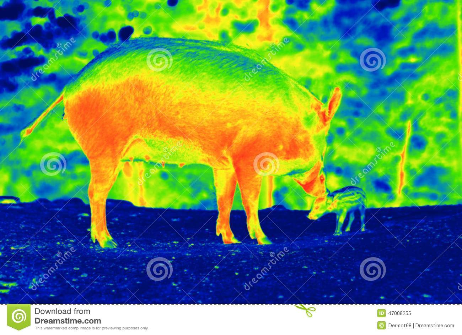 21 Bear Thermal Photos   Free & Royalty Free Stock Photos from ...