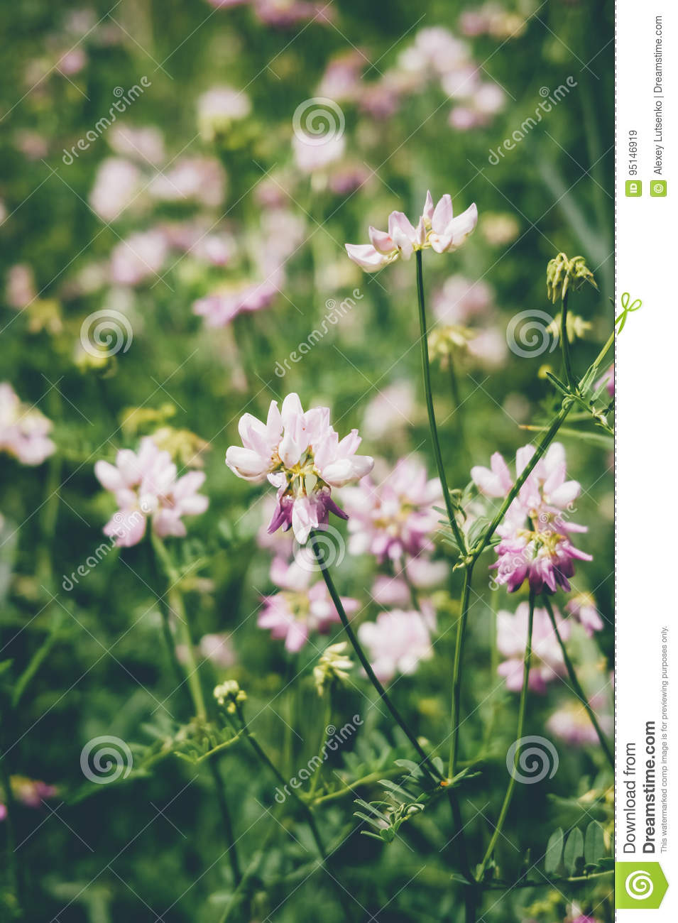 Wild pink flowers in green grass stock image image of spring wild pink flowers in green grass mightylinksfo