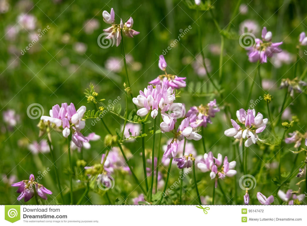 Wild pink flowers in green grass stock photo image of natural download comp mightylinksfo