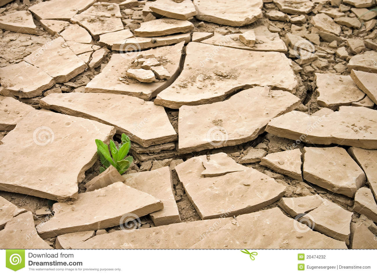 wild plant growing in a cracked dry ground stock child praying clipart image child's praying hands clipart