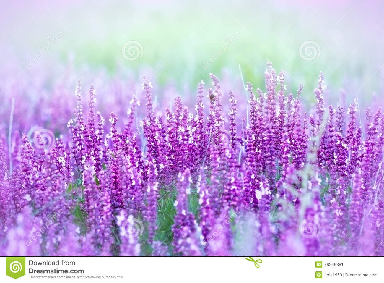 Wild Purple Flowers Stock Image Image Of Grass Nobody 36245381